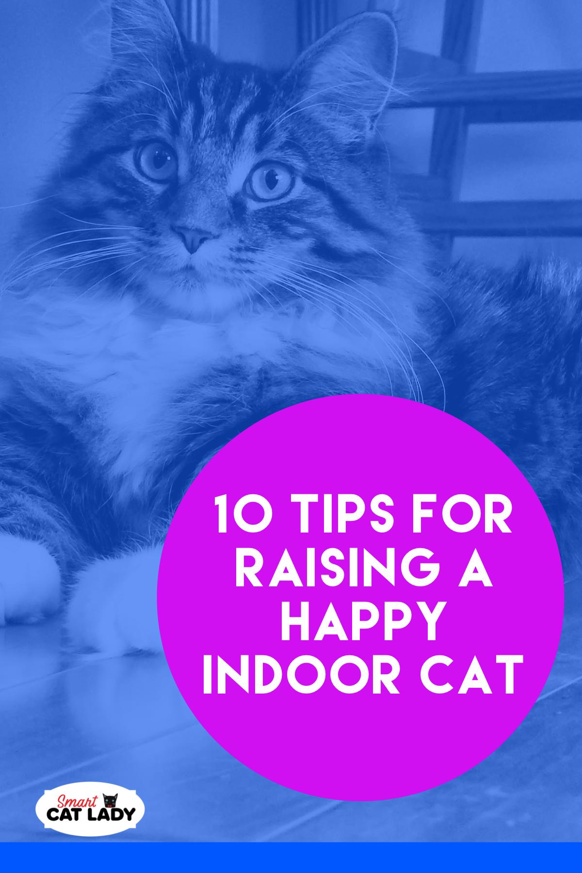 10 Tips For A Happy Indoor Cat Indoor Cat Cats Cat Care