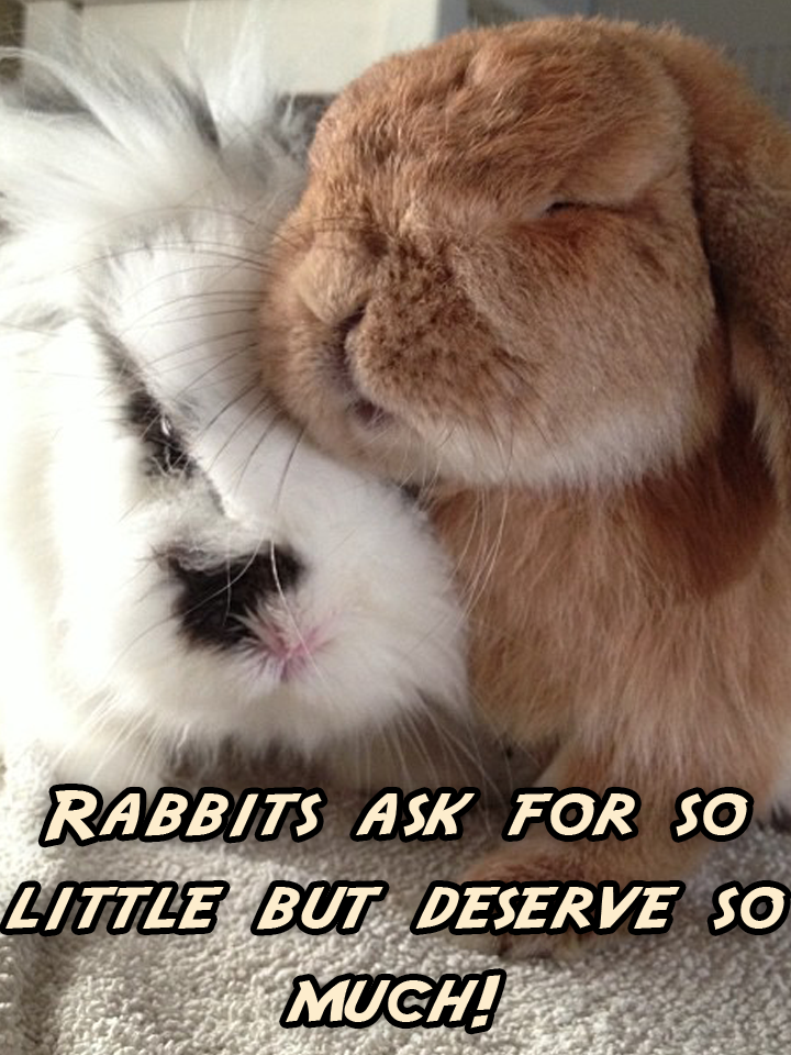 Only the cutest rabbit pictures, advice sayings, quotes ...