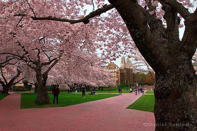 Uw Quad Pretty Places Gorgeous View University Of Washington