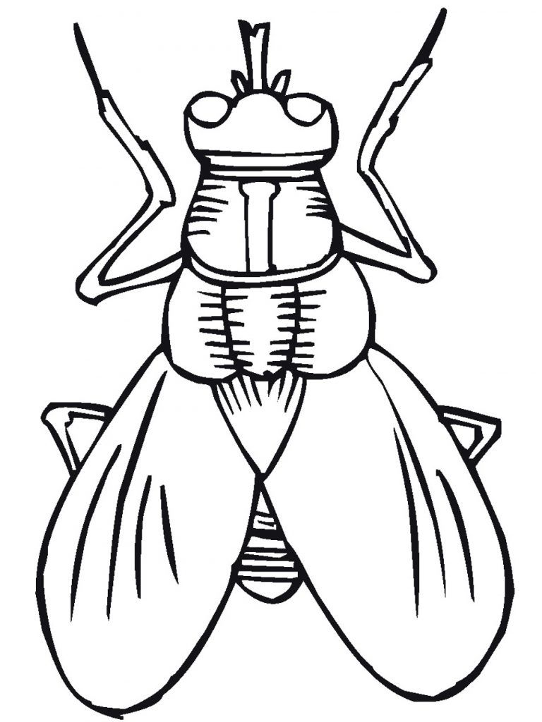 Insect Coloring Pages Best Coloring Pages For Kids Bug Coloring Pages Insect Coloring Pages Coloring Pages For Kids [ 1024 x 768 Pixel ]