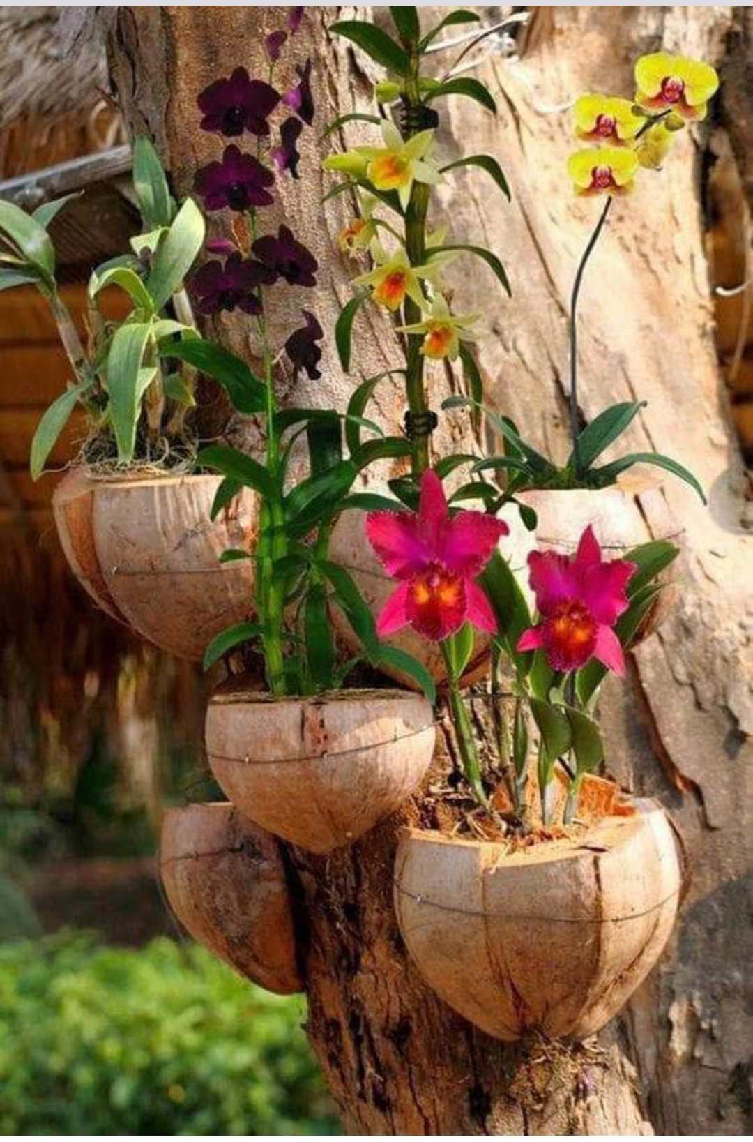 Pin By Maria Alejandra Tejada Sanabia On Jardines Terrazas Patios In 2020 Orchid Planters Hanging Orchid Plants