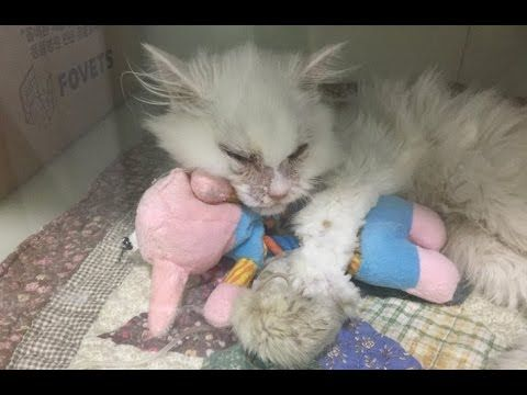 No One Believed This Cat Would Survive, But a Woman Did and Changed His Life - YouTube
