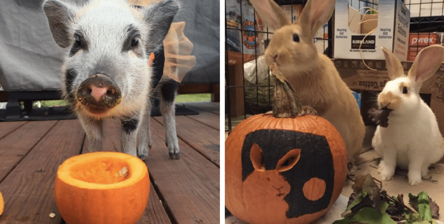 Pets That Took Pumpkin Carving To A Whole New Level Pumpkin Carving Pets Love Pet