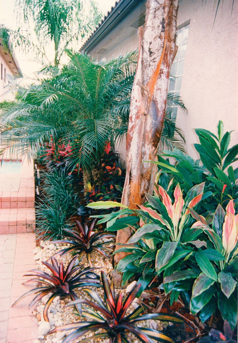 This Palm Beach Gardens Landscape Is Planted In An Area Only 4 Feet Wide!  Palms