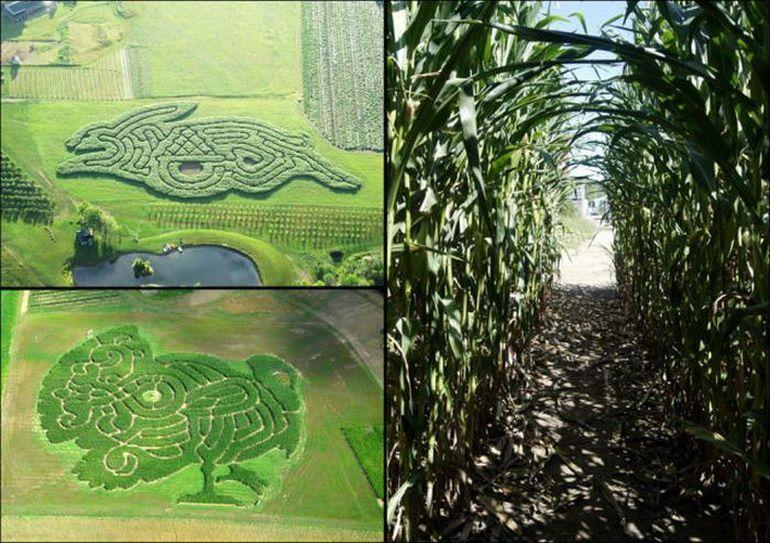 Strange Fall Fun Fantastic Corn Mazes And Natural Labyrinths Rabbit Turkey Corn Maze Maze Halloween Horror