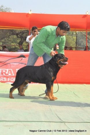 Http Www Dogspot In Photos Nagpur Dog Show 228 Dog Show Dogs