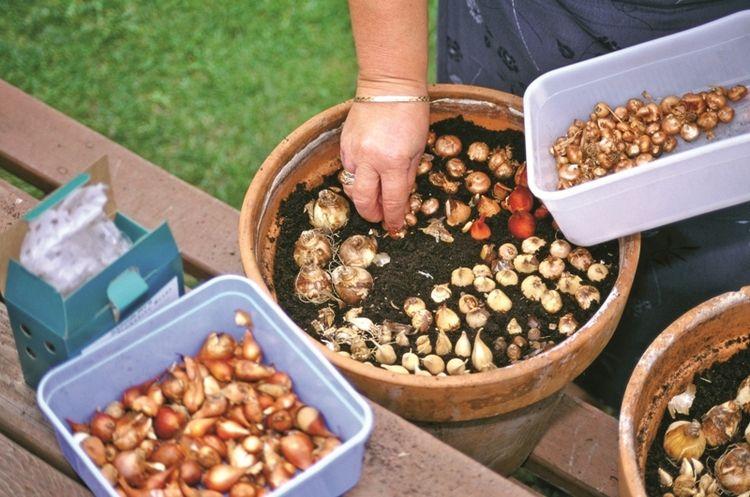 Ak ste boli niekedy zvedaví na to, ako hlboko treba cibuľoviny sadiť, pozrite sa na nášho sprievodcu. Poradí vám pri výsadbe nielen do nádob, ale i do voľnej pôdy v záhone.