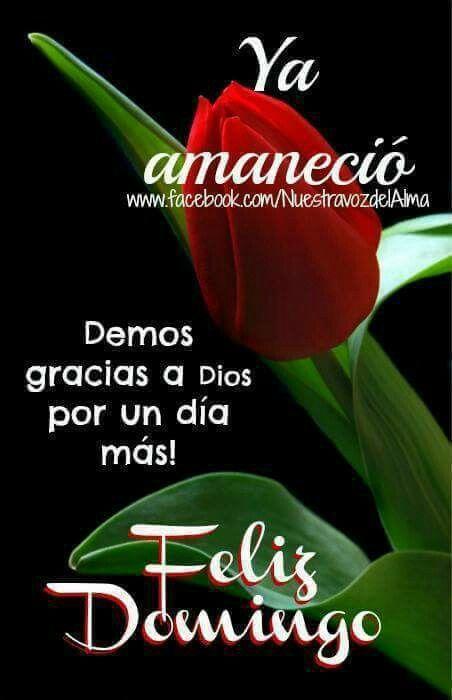 Pin De Cristina Solis En Mis Rosas Con Imagenes Feliz Domingo