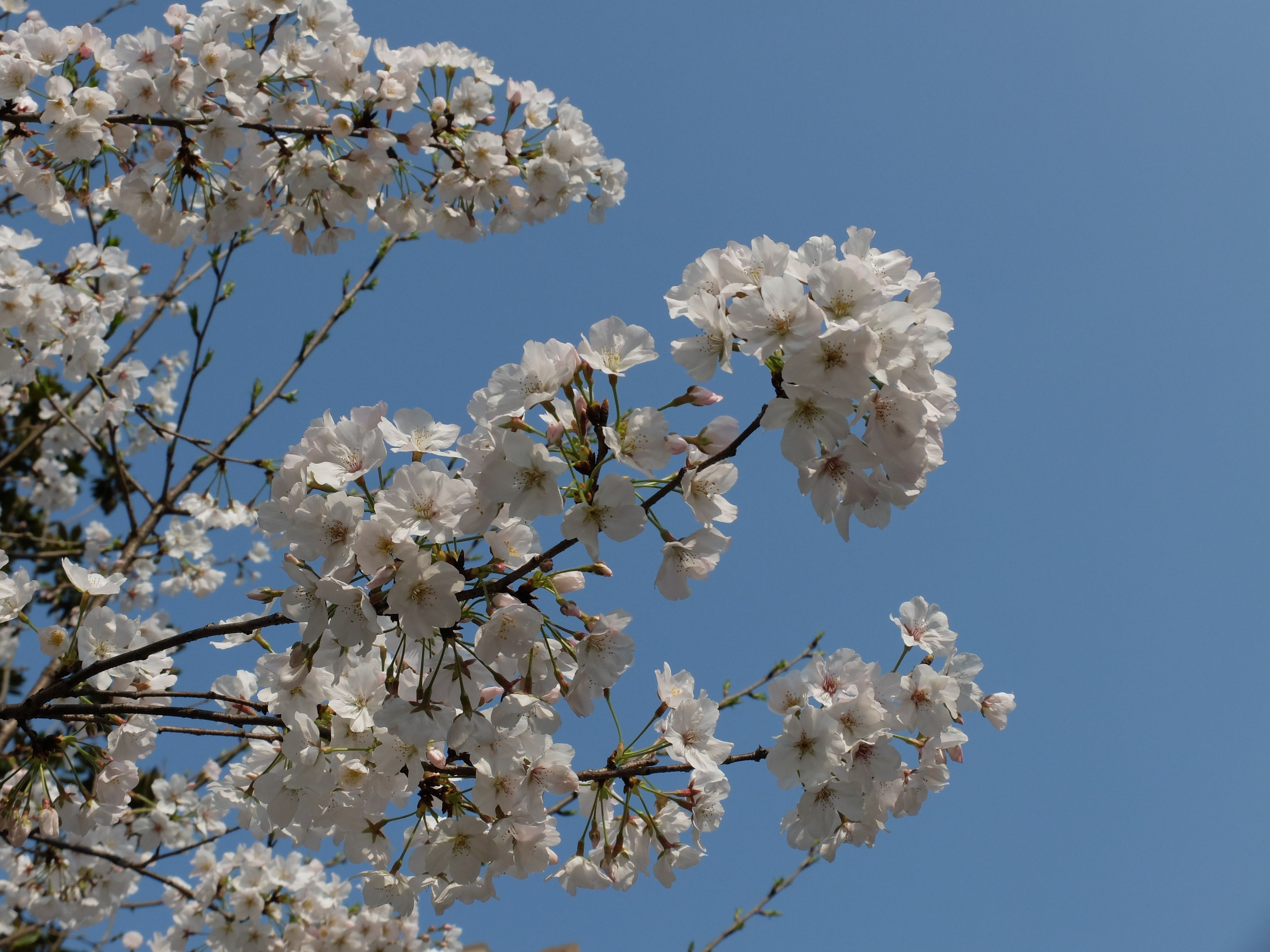jyw_324 adlı kullanıcının My photo panosundaki Pin Ağaç