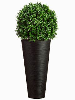 Wp7667 Gr 44 Hx16 Wx16 L Boxwood Ball In Bamboo Container Green