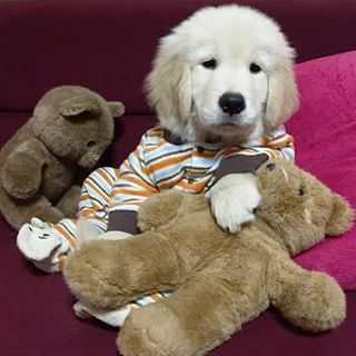 12 Puppies In Pajamas That Will Brighten Your Day Puppies In