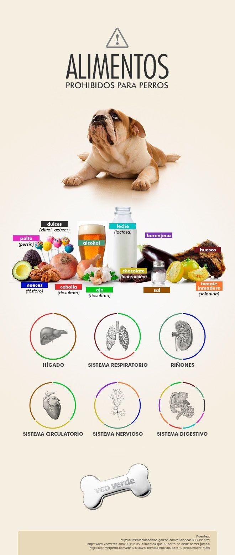 Tipos De Collares De Castigo Para Perros Infografia Perros Alimentos Prohibidos Para Perros Perros Y