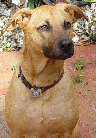 10 Interesting Dog Breeds That Originated In India Dog Names