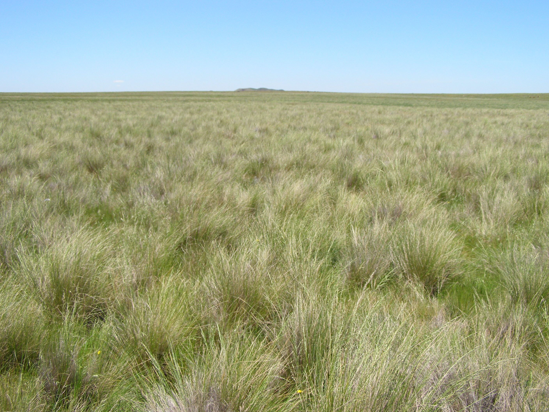 Native grasslands and grassy woodlands Architecture