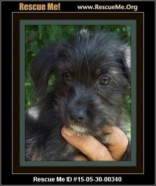 Maltese Rescue Florida Little Dogs Animal Rescue Animals