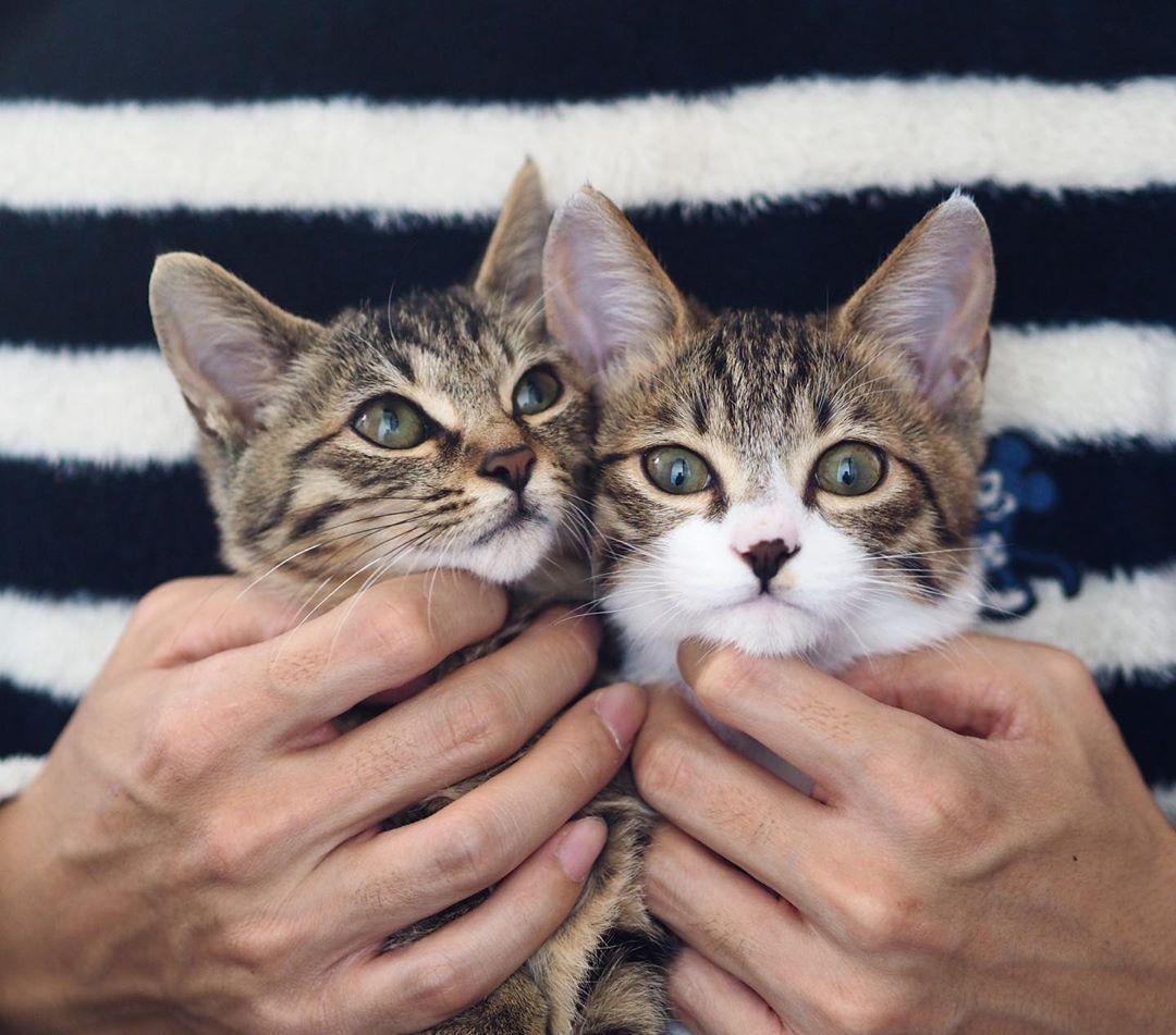 Cats Cat Catsofinstagram Cats Of Instagram Catsagram Catstagram Catlover Pets Instacat Catlovers Meow Kittens Kitten Kitt Cat Day Cats Cat Lovers