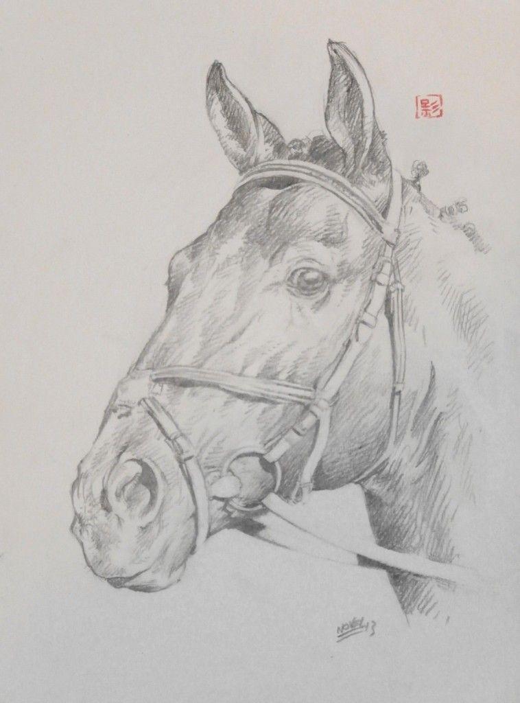 T te de cheval dans chevaux p5060088 758x1024 dessin - Dessin tete de cheval ...