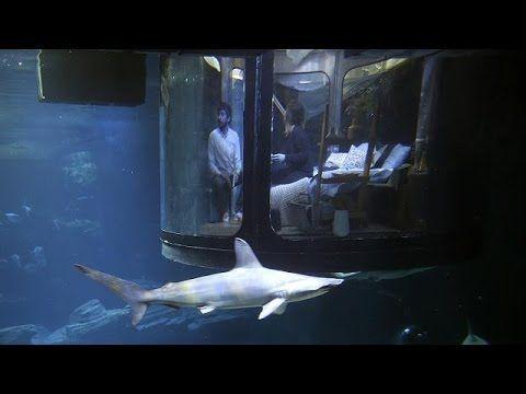 Will you enjoy Paris aquarium as they offer underwater bedroom with sharks as neighbors ~ NOTJUSTPOST.COM