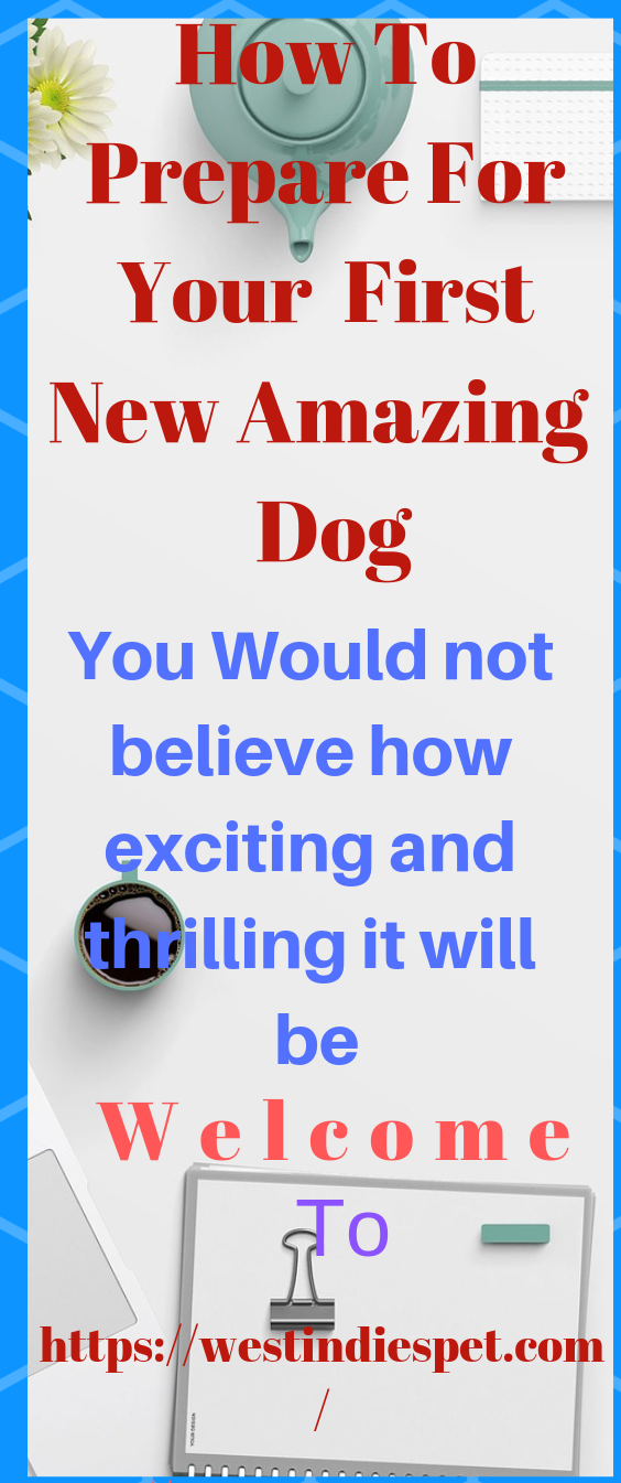 To all new dog owners and firsttime owners to the