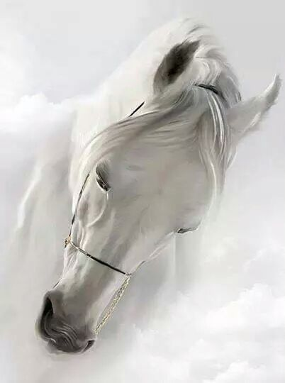 beautiful white horse by terrie