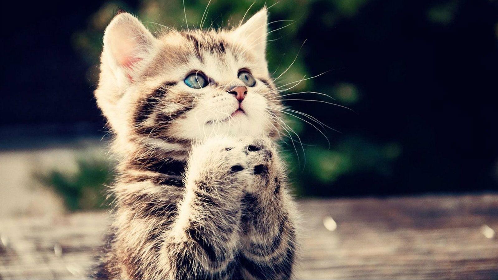 Dating pisica pisica Revizuirea site- ului Edarling Dating