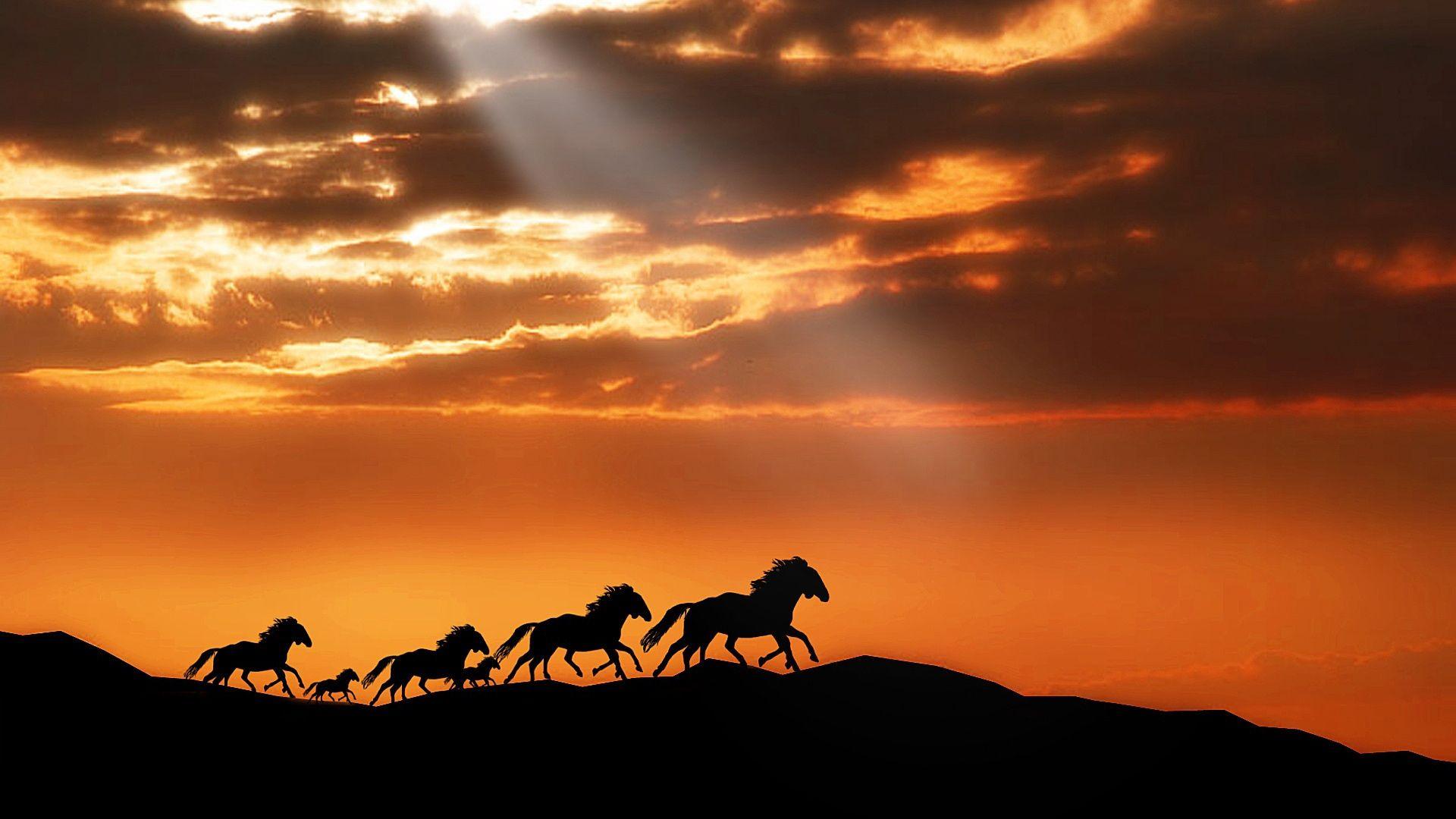 Cool Wallpaper Horse Samsung Galaxy - 991d89d6a8c23d4f5187713267beabbc  Snapshot_381134.jpg