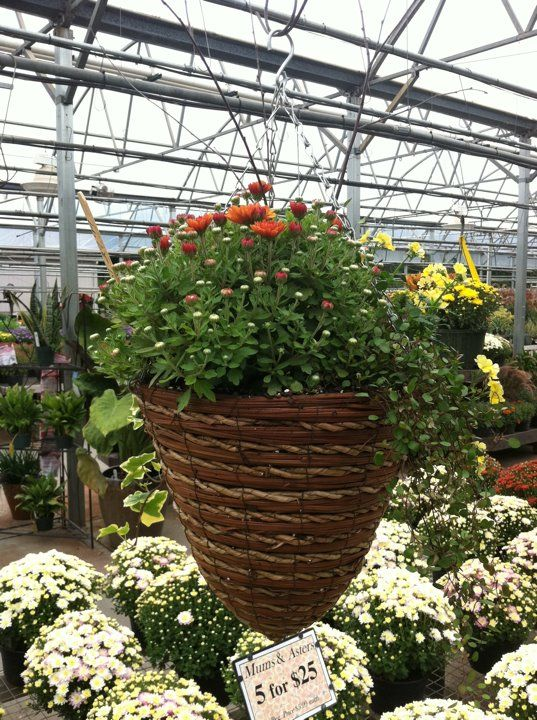 Fall Hanging Baskets Winter Plant Nursery Flowers Yard Ideas