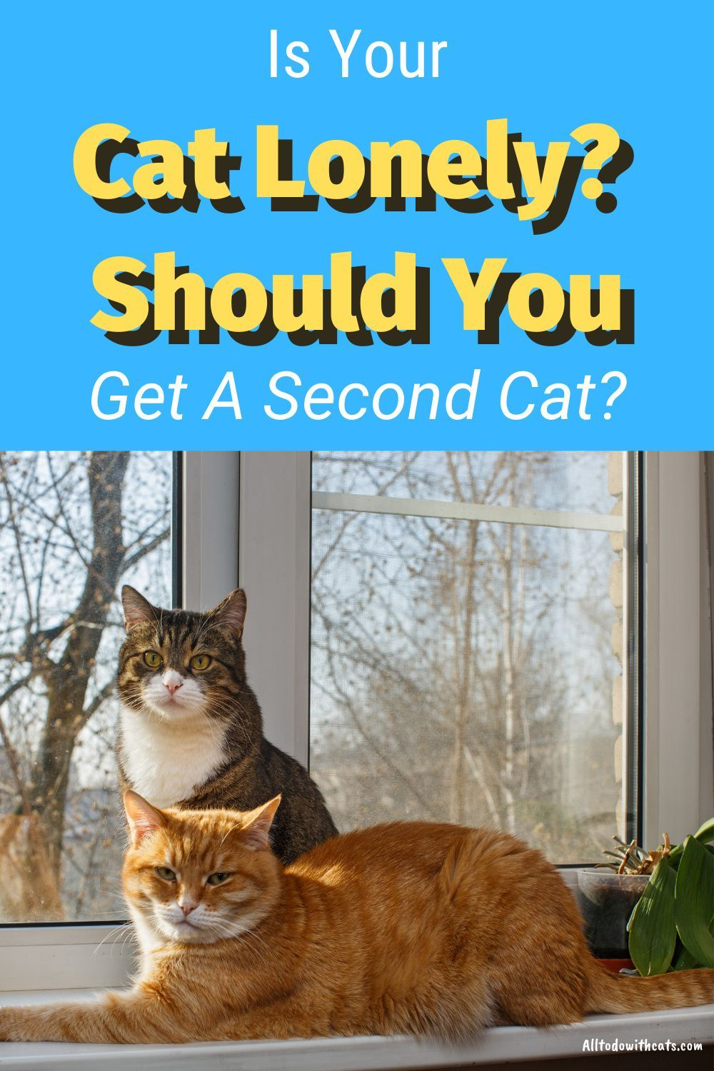 Should I Get Another Cat To Keep My Resident Kitty Company In 2020 Cats Cat Care Tips Introducing A New Cat