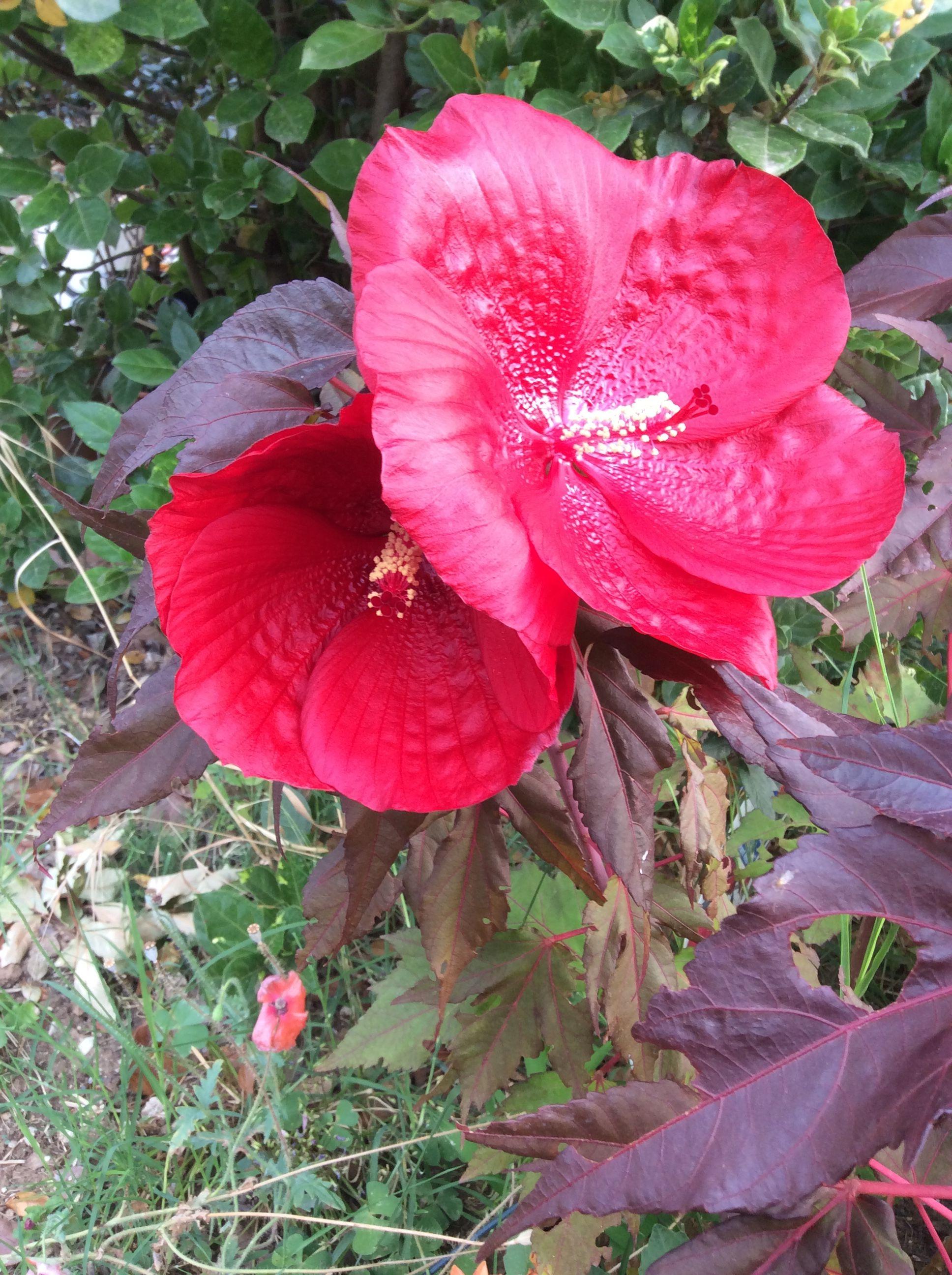 Pin di manuela dal corso su giardinaggio pinterest