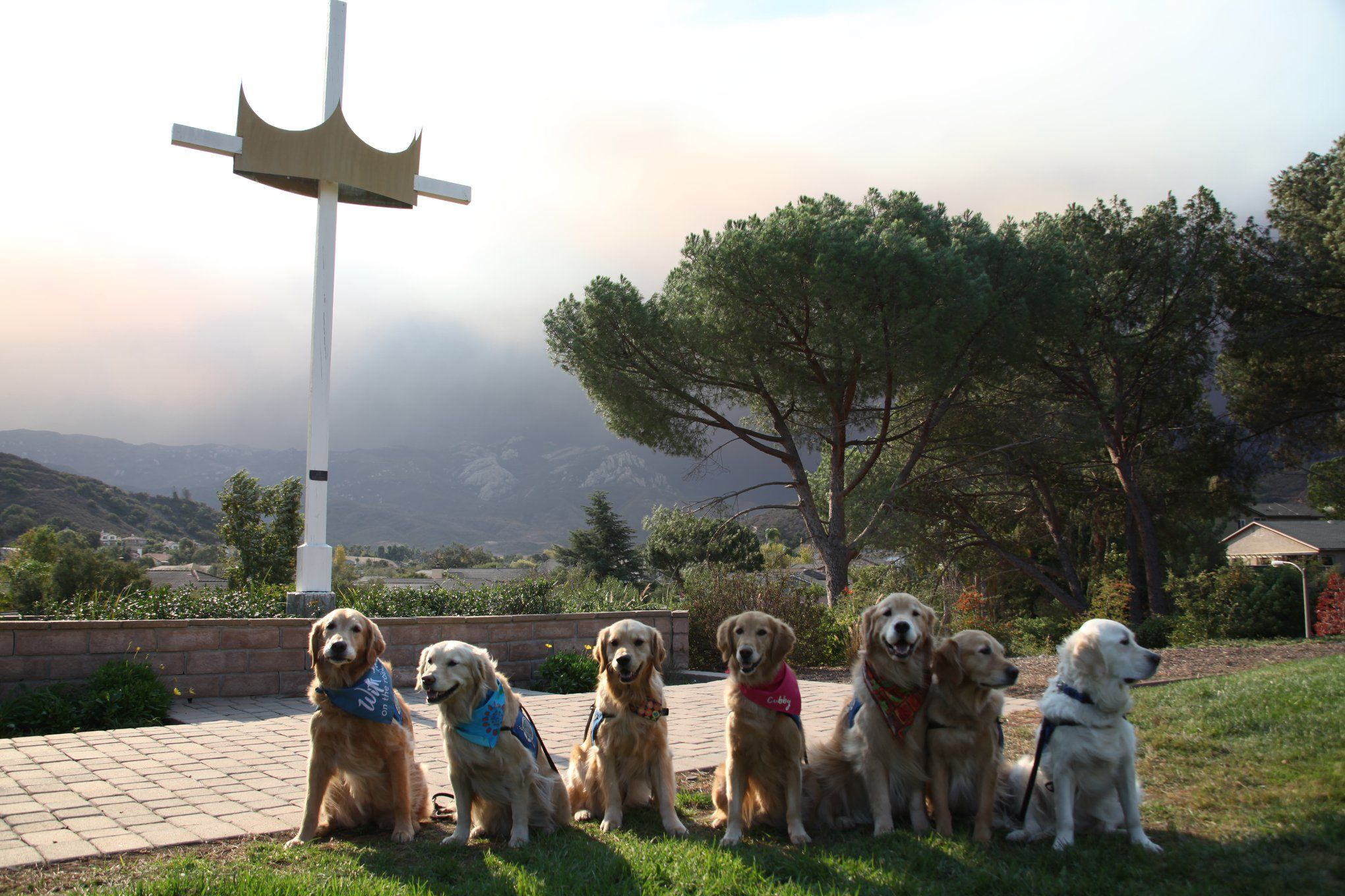 Why We Turn To Dogs When Disaster Strikes Dogs Search And