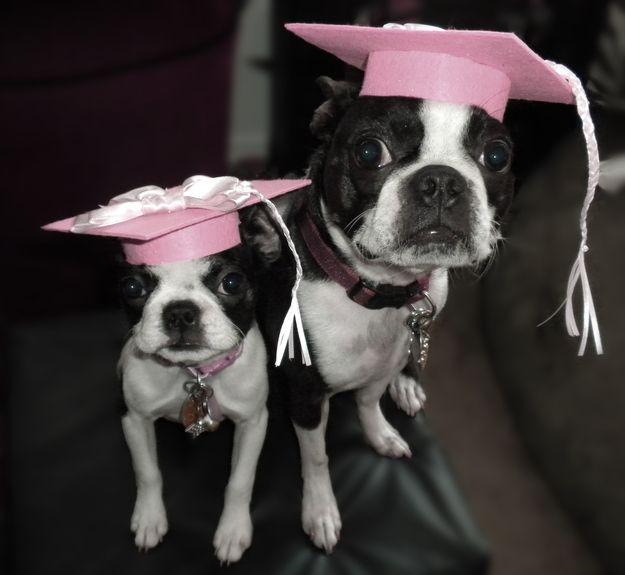 The Graduates.