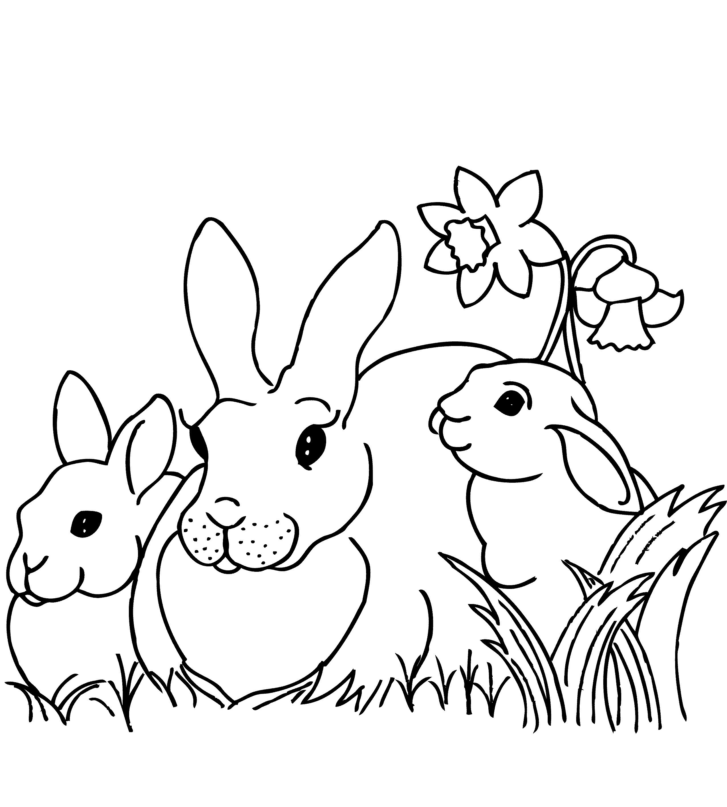 rabbits Adult coloring pages | Animal Colouring Pages | Pinterest