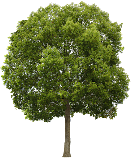 tree PNG image with transparent background -   18 plants Texture png ideas
