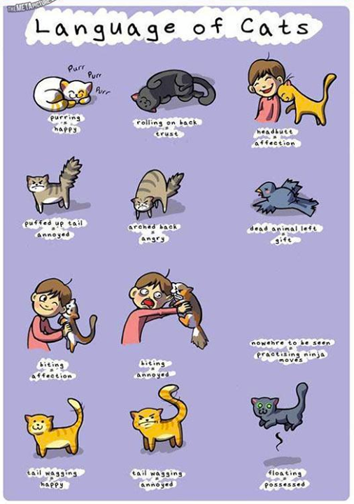 cats translated Cat language