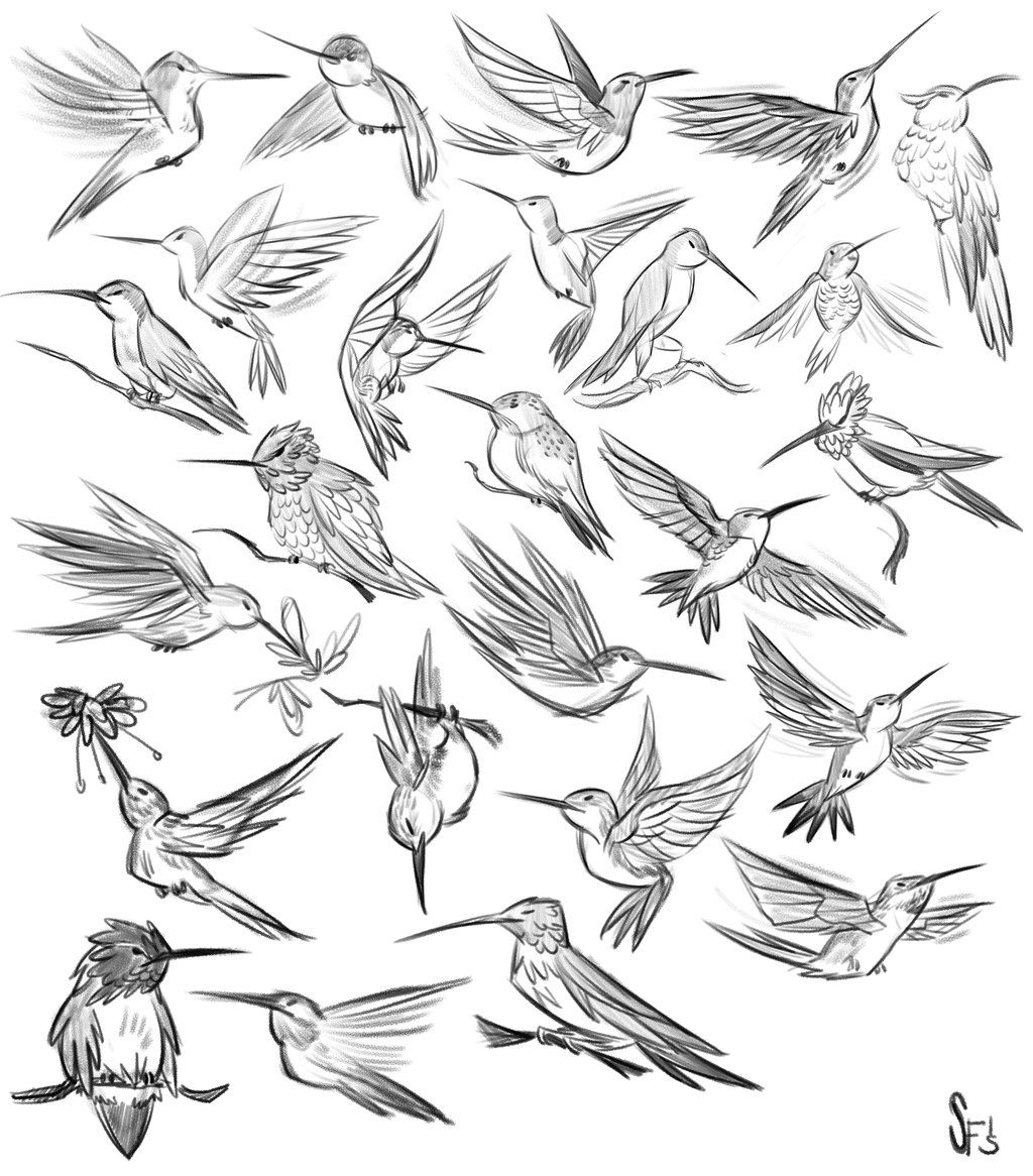 Animal Studies: Hummingbirds by Tigerhawk01 on DeviantArt   ★ || CHARACTER DESIGN REFERENCES™ (https://www.facebook.com/CharacterDesignReferences & https://www.pinterest.com/characterdesigh) • Love Character Design? Join the #CDChallenge (link→ https://www.facebook.com/groups/CharacterDesignChallenge) Share your unique vision of a theme, promote your art in a community of over 50.000 artists! || ★