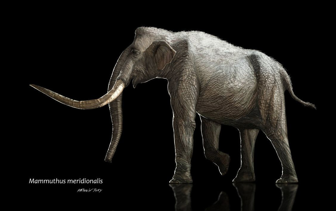 Mammuthus meridionalis by AntoninJury on DeviantArt