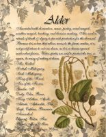 Book of Shadows: Herb Grimoire - Alder by CoNiGMa