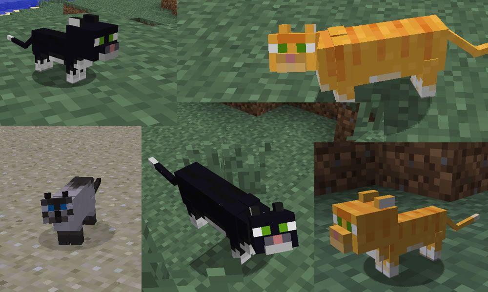 Фото всех видов кошек в майнкрафте