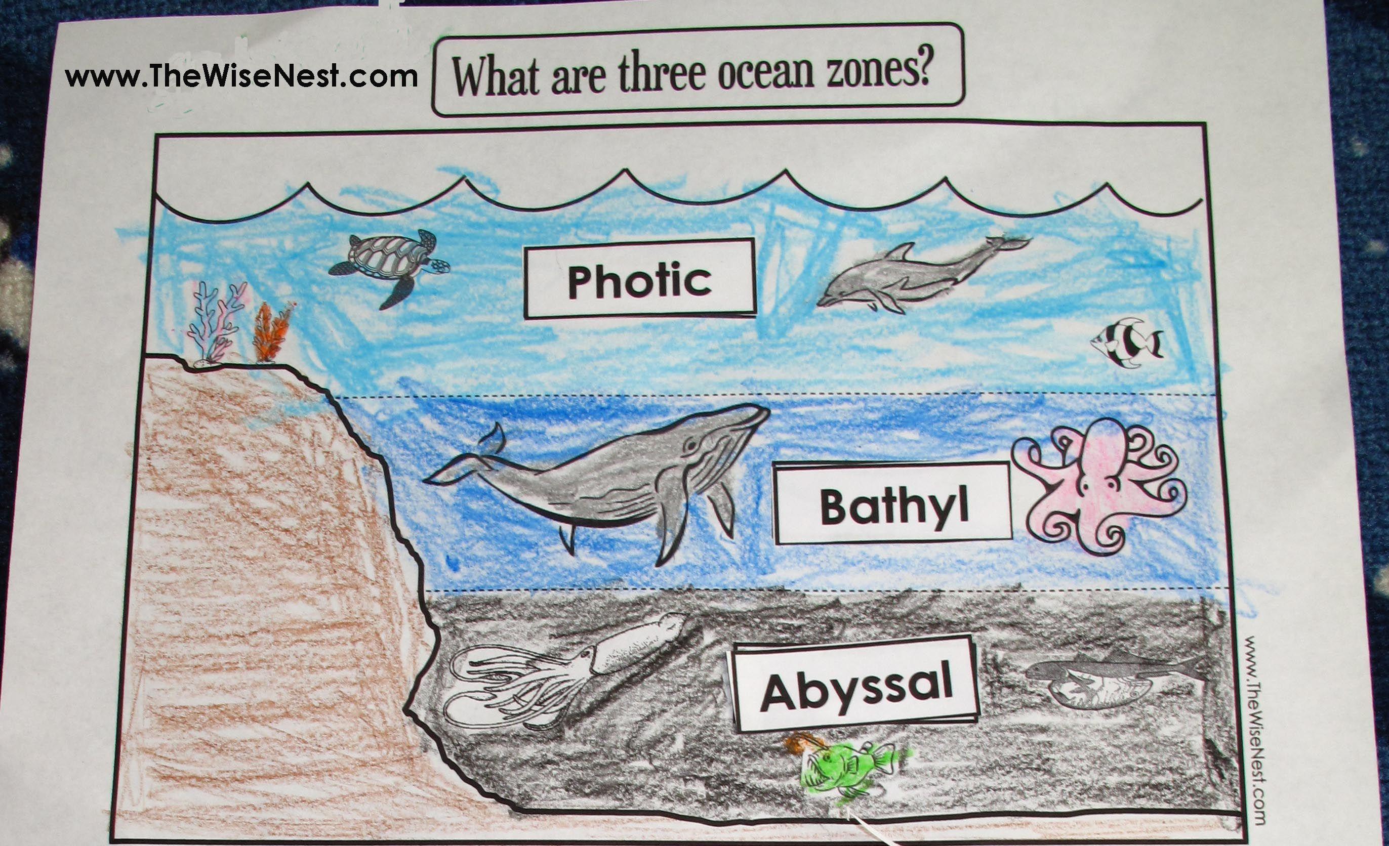 Ocean Zones For Week 19