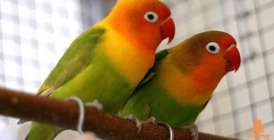 Pin En Aves Mas Hermosas Creadas Por Dios