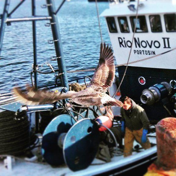 Vuelo de la vida ... seagull looking for leftover fish from boats #portosin #holiday #vogue #bienestar #pontevedra #portodoson #noia #monte #mar #somosgalegos #aves #turgalicia #kisses #xantar #design #sol #yoga #pescado #beach #love #libre by galicia_trekking