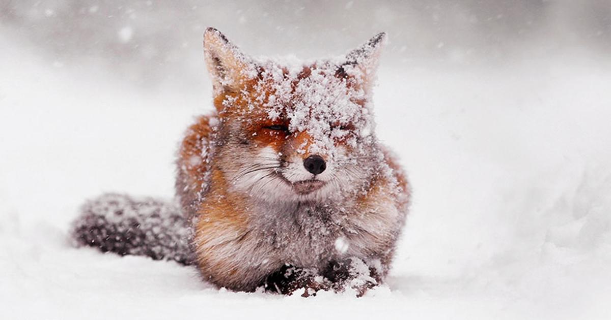 Foxy Christmas Fairytale By Dutch Photographer Roeselien Raimond   Bored Panda