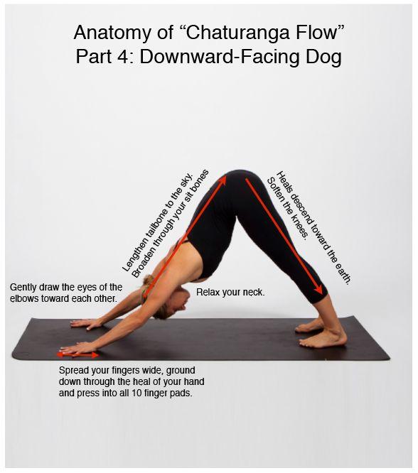Anatomy Of Chaturanga Flow Part 4 Good Posture Pinterest