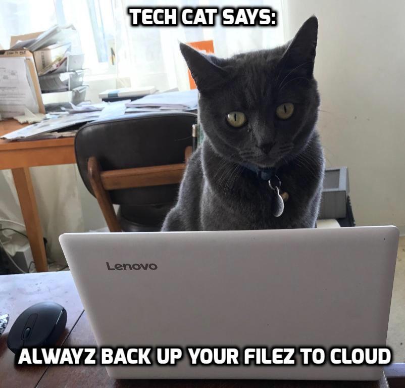 Tech cat meme Tech, Cat memes, Cats