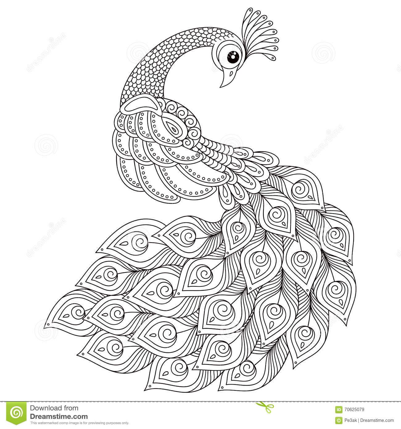 peacock adult antistress coloring page stock vector