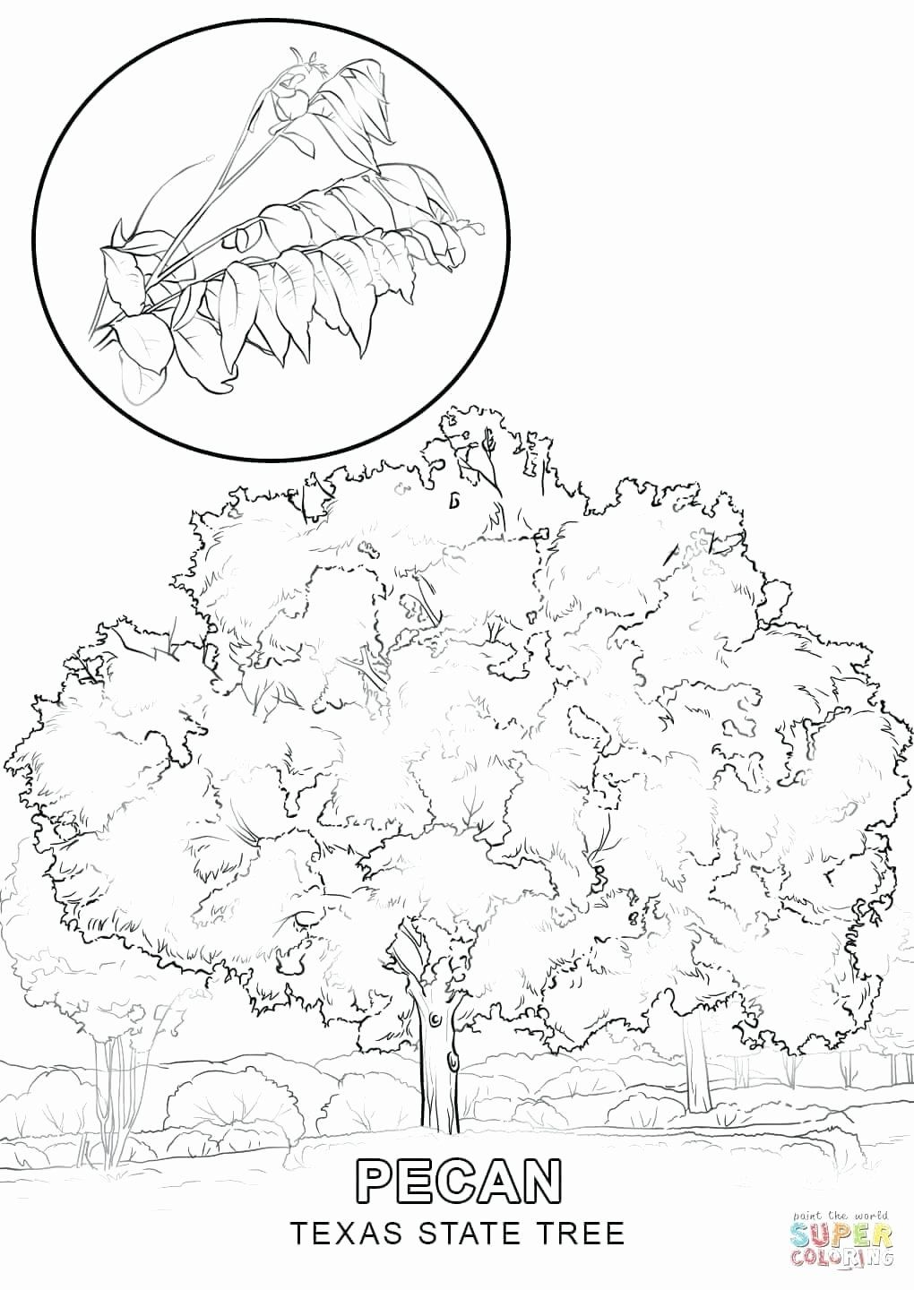State Fair Coloring Pages Di 2020