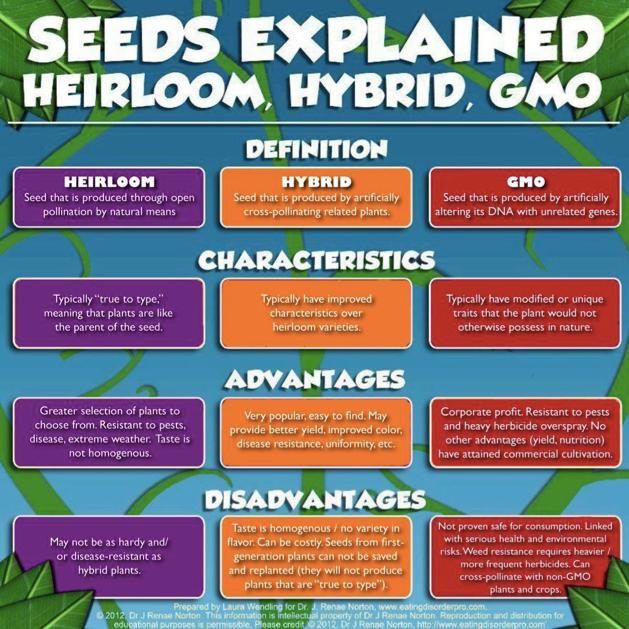 Heirloom Vs Hybrid Vs GMO Seeds
