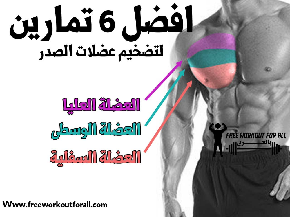 أفضل تمارين الصدر تضخيم عضلة Free Workouts Workout Bodybuilding