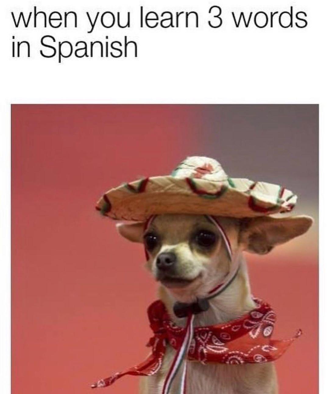 Top Funny Memes Trend 2020 Inspiration Funny Memes Tumblr Memes Memes Quotes Funny Meme Pretty Memes I Me In 2020 Funny Animal Memes Really Funny Memes Funny Dog Memes