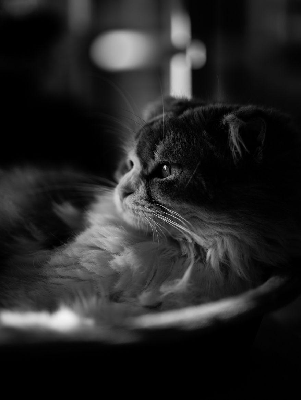 Photograph Molly by Akimasa Harada on 500px